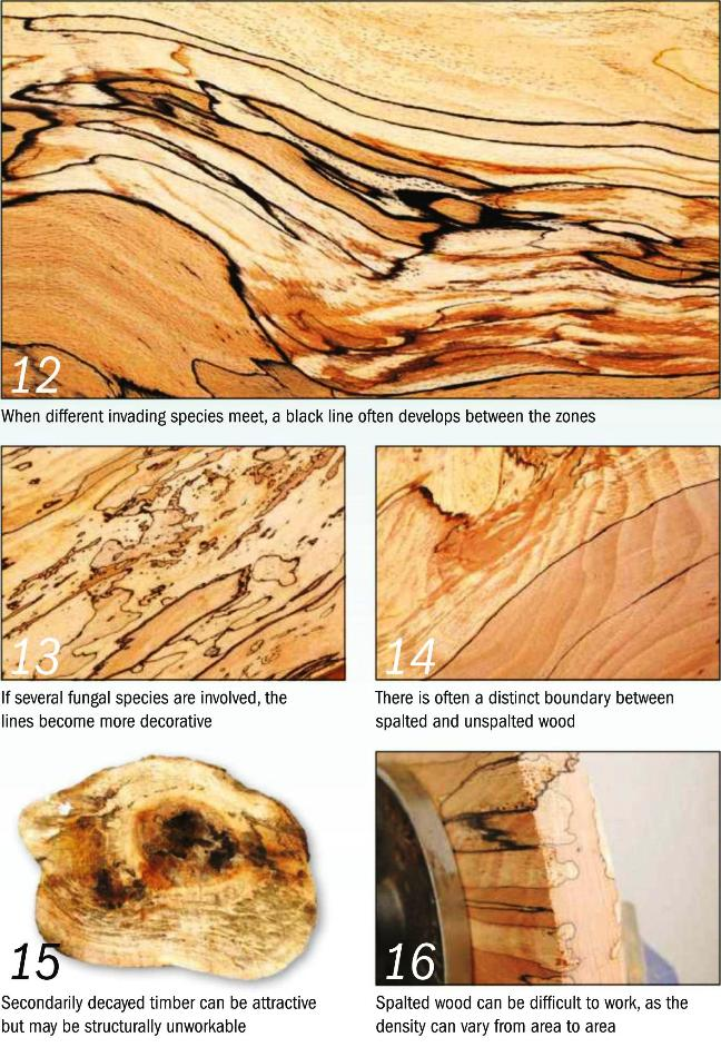 Spalted wood Photo_4